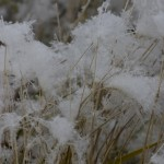 Cotton-like frost