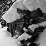 Saints John, cabin, snow, black and white