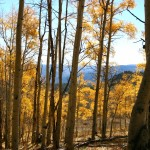 I was amazed that these aspens still held their leaves into late October.
