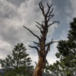 Dead tree, HDR, colorado sky