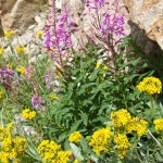 Wildflowers and granite.