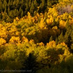 Of course I included a shot of Colorado Aspen Gold!